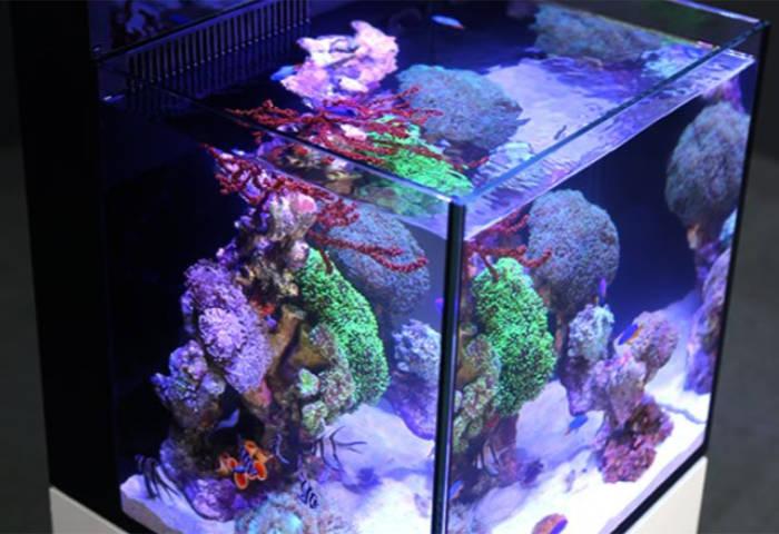 Red Sea Max Nano Meerwasseraquarium mit weissglas Aquariumscheiben