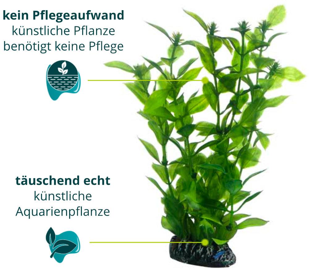 Dieses Bild zeigt die Hobby Hygrophila 20cm - Kunstpflanze