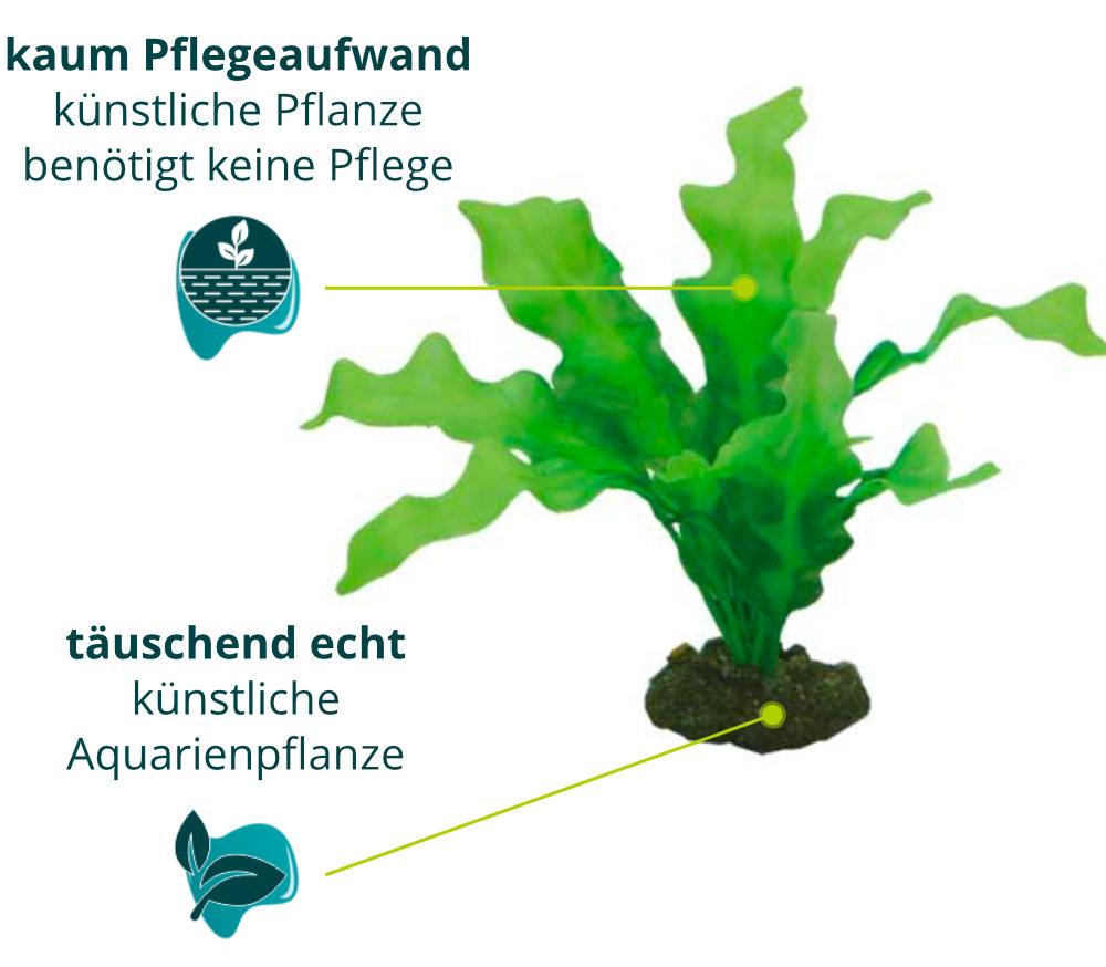 Dieses Bild zeigt die Hobby Echinodrus - Aquarium Kunstpflanze