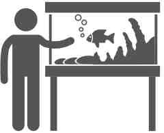 media/image/noun_pet-fish_815925-2x.jpg