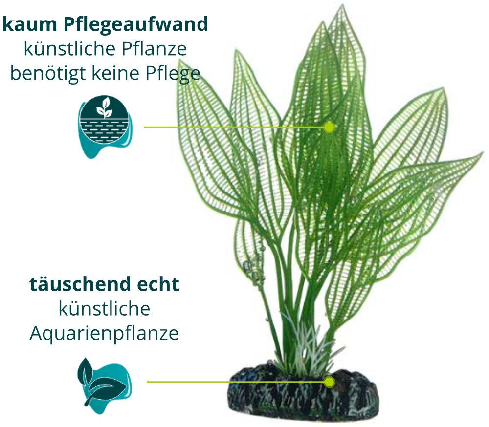 Dieses Bild zeigt die Hobby Aponogeton - Aquarium Kunstpflanze