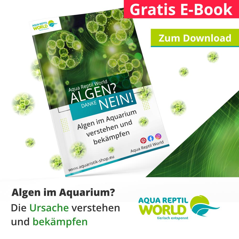 Dein E-Book Algen? Nein, danke zum Download