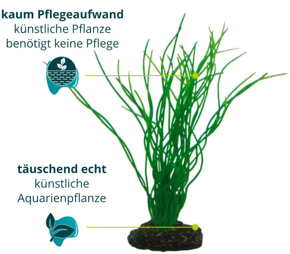 Dieses Bild zeigt die Hobby Sagittaria - Aquarium Kunstpflanze